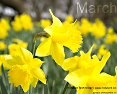 Desktop Wallpaper: March Picture 3
